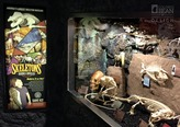 Skeletons: Animals Unveiled Display at Ripleys Believe It or Not!